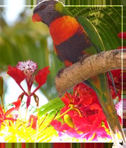 sidebar-bird
