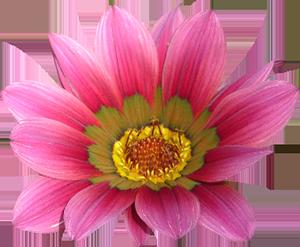 sidebar-flower